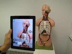 Ein Tablet offenbart Hotspots mit weiteren Informationen zu einem anatomischen menschlichen Modell.